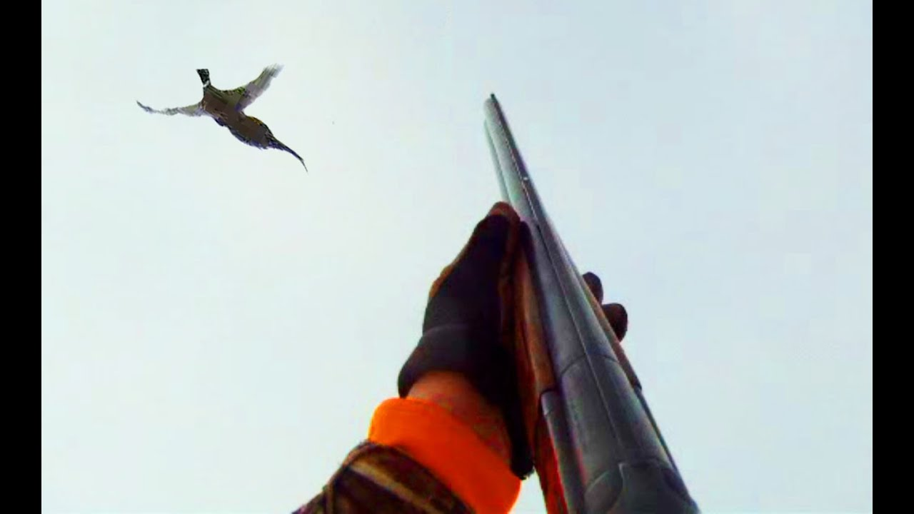 Pheasant Hunting S. Dakota - YouTube