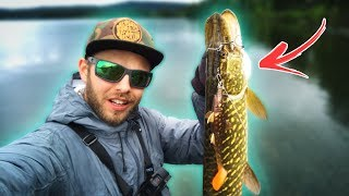 4 Tips for PIKE FISHING from the Shore 🐊