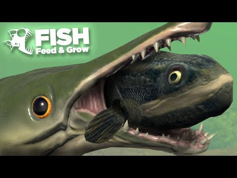 NEW FISH EATS THE SWAMP! - Fish Feed And Grow | HD