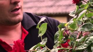 Frank van Etten - Dans Laila Dans (Officiële Videoclip)