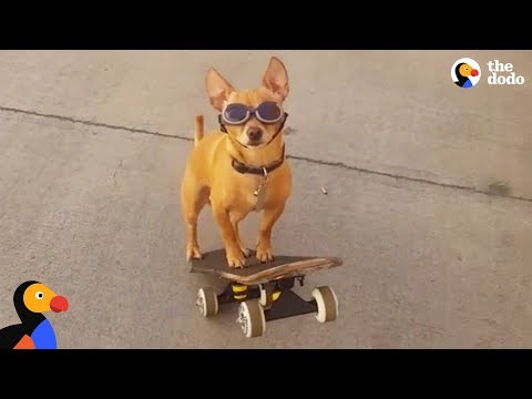 Dog Loves To Go To The Skate Park With His Dad | The Dodo