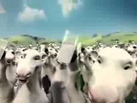 Ľàn bò nhảy múa video vietgiaitri com