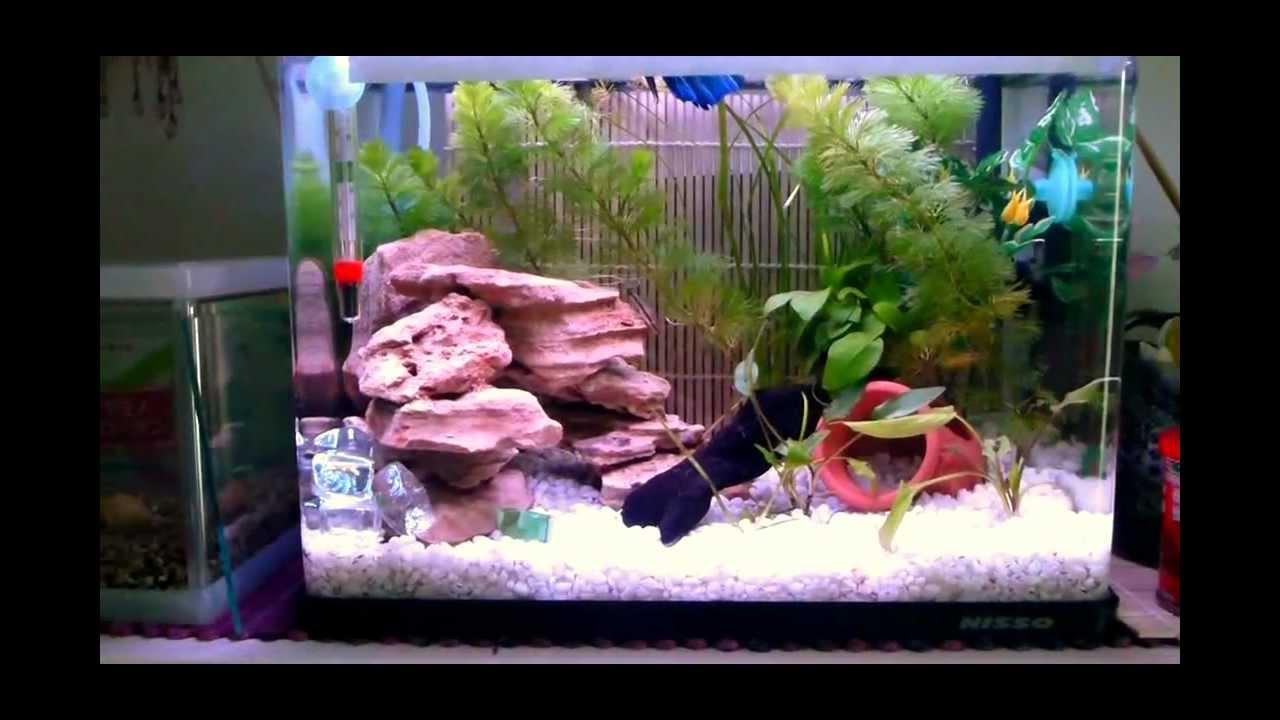 Freshwater fish for 5 gallon tank - Betta Fish 5 Gallon Setup With New Led