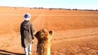 Mèlange de Maroc [Weird Travel Video]