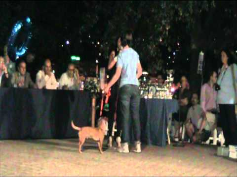 DogPride_2011_06.mpg
