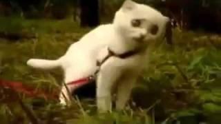 Дьявольский Кот !!!!Он на стреме))).flv