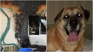 8 Weeks After Her Family's Home Went Up In Flames, This Dog Found A Miracle Under The Floorboards