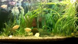 Water World #44 / Наконец то! Смена освещения в аквариумах / LED light(Настал этот день. Мы меняем освещение в аквариуме. Группа MyWaterWorld: https://goo.gl/YFmvQY Товары для аквариумистики:http:..., 2015-11-25T21:12:17.000Z)