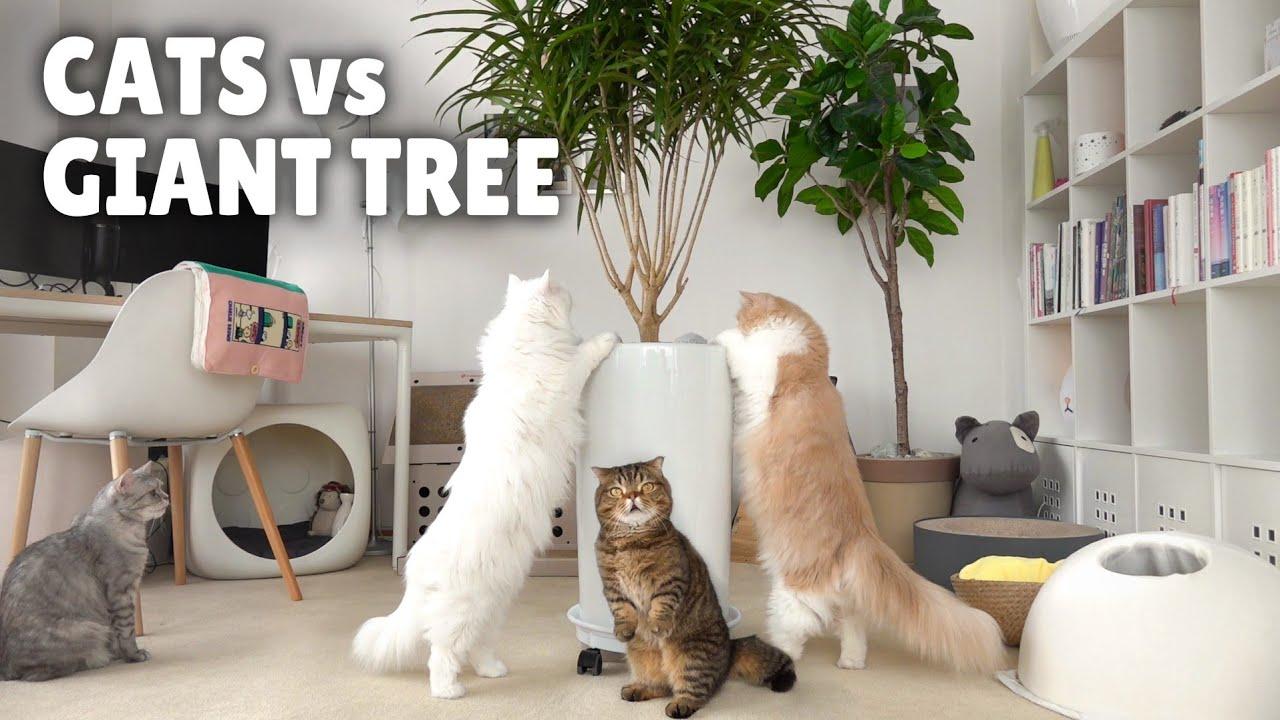 Cats vs Giant Tree Monster! | Kittisaurus