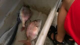 Лов рыбы! (228)