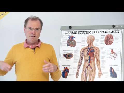 Einführung – Herz-Kreislauf-System, Teil 1 – YVS339 – Wirkung Von Yogaübungen