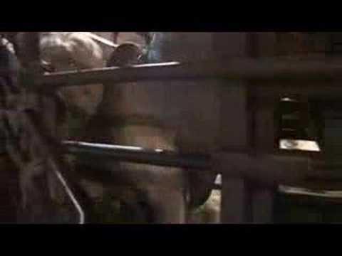 Brazil to Lebanon: Live transport of cattle 1/2
