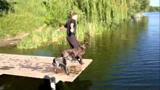 Я и собаки.mp4