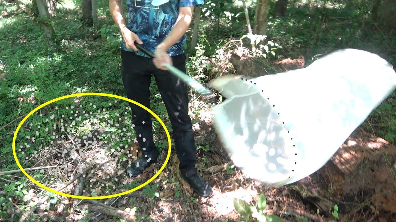 蚊が大量発生している森で虫捕り網を振り回すと...