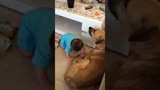 Собака напала на малыша!Чуть не умер
