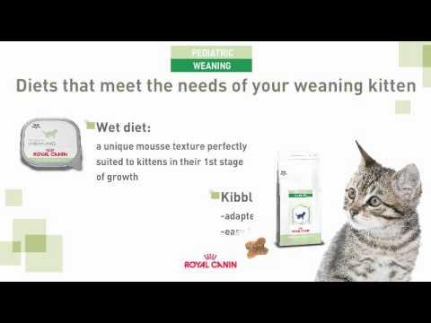 Royal Canin BabyCat Kitten Food - YouTube