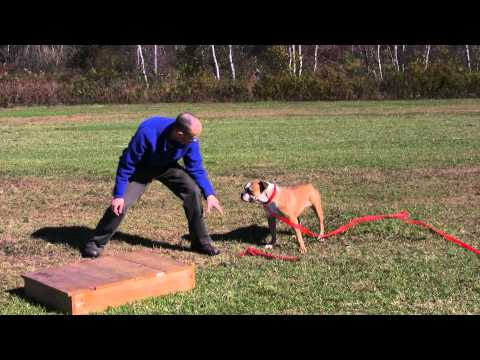 How to Play Tug of War with Your Dog  the Right Way  to Improve Your Connection