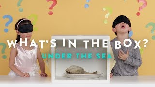 Under the Sea | What's in the Box | HiHo Kids