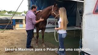 VLOG GRAND PRIX HARAS RAPHAELA 2019 - PROVA DO MILHÃO