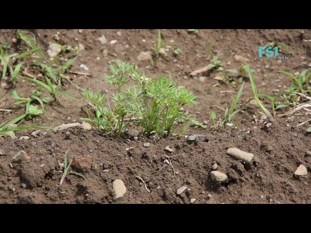 Slow TV | garten:fern:sehen - Episode 2 | FS1
