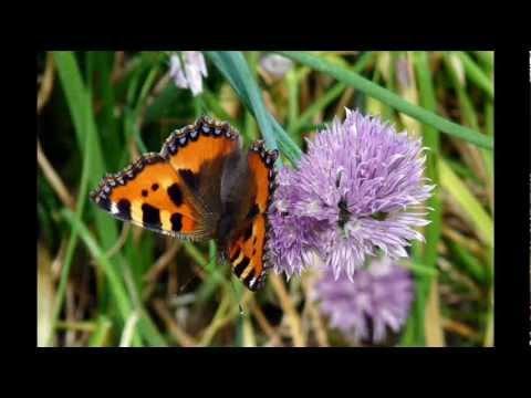 Fiori farfalle animali.wmv