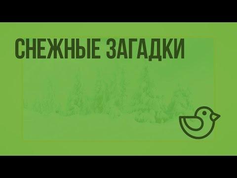 Снежные загадки. Видеоурок по окружающему миру 1 класс