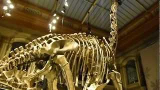 WORLD RECORD: The tallest Dinosaur skeleton