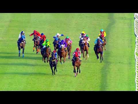 Thailand horse racing 2017 November 25, Race 8 Div 5A