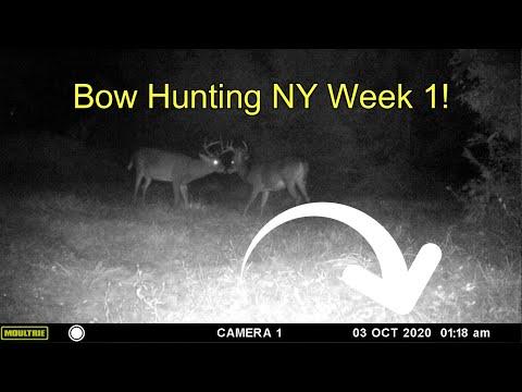 Bow Hunting Upstate NY 2020 - Week 1 Highlights!