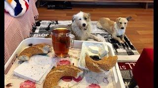 Simit ve Peynirle Kahvaltı Yapan Köpekler