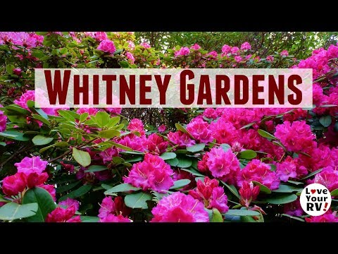 Visit to Whitney Gardens in Brinnon Washington on HWY 101