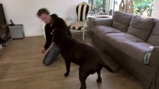 Hoe Speel Je Met Je Hond?