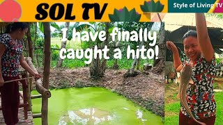 How to Catch a Hİto Easily | The Lesson and Technique in Fishing for Hito