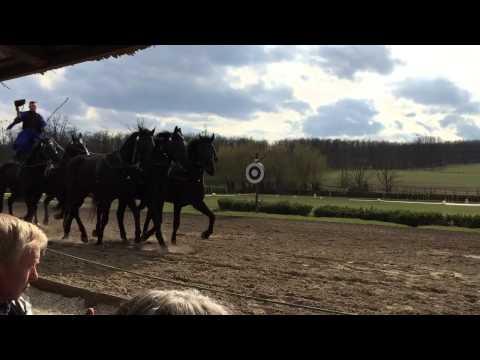 Danube 2015 Horse Farm