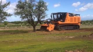 Prime Tech PT-600 - Almond Tree Removal IMG 1306