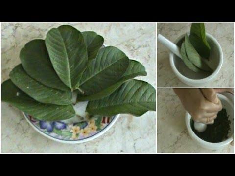 cara-menghilangkan-jerawat-dengan-cepat-secara-alami-dengan-herbal-daun-jambu-biji
