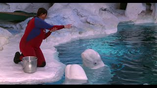 3 Things You Didn't Know About Beluga Whales | SeaWorld®