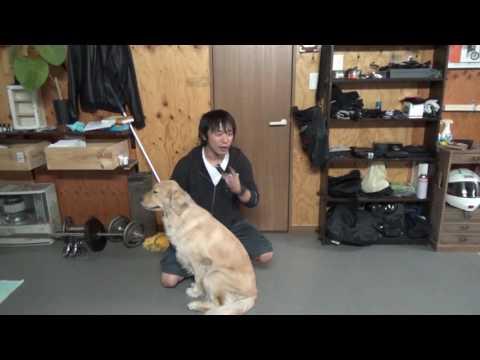 間違った犬の叱り方10連発!!