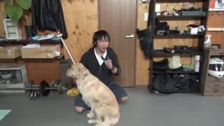 犬舎「百式」 リクエストも受け付けています shohei010@gmail.com ツイ...