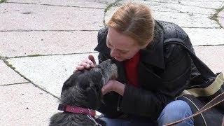 Новые правила жизни собак: выгуливать животных можно только на спецплощадках