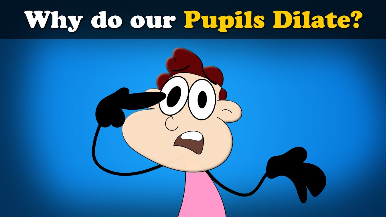 Why do our Pupils Dilate? + more videos   #aumsum #kids #science #education #children