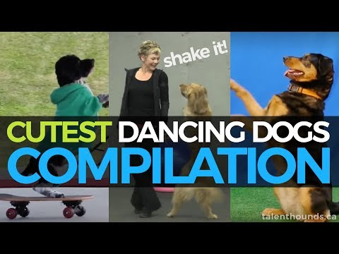 Cutest Dancing Dogs Compilation 2017