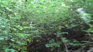The sounds of sex in the bushes....  MVI_7505.AVI