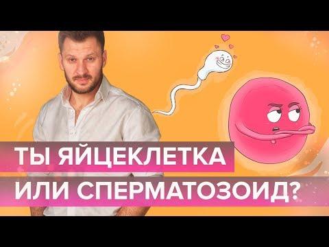 Ты яйцеклетка или сперматозоид?
