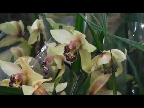 Орхидеи на Садоводе😉😉😉😉