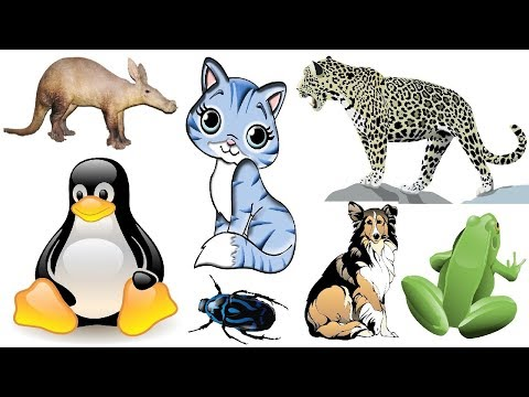 List of Animals - Name of Animals M - Learn English - Vocabulary Building from YouTube · Duration:  2 minutes 29 seconds