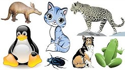 Animal - List of Animals - Name of Animals - 500 Animals Name in English from A to Z