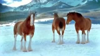 Прикол с лошадьми.