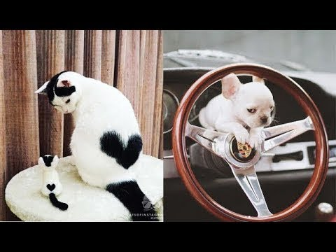 Funny And Cute Cats and Kitten Videos 2019 #15 - Funny Animals