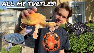ALL OF My RARE COLORFUL TURTLES In ONE VIDEO!